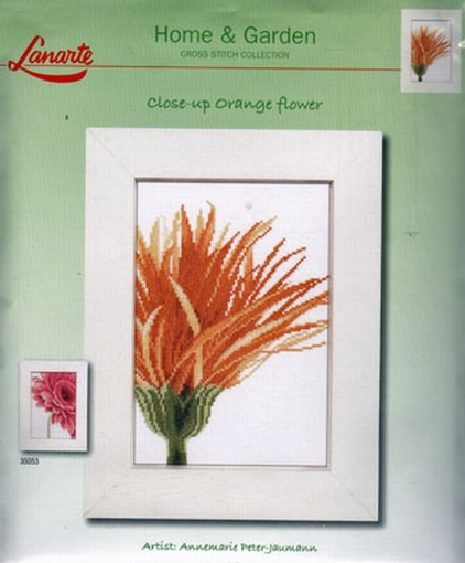 Close-up orange flower